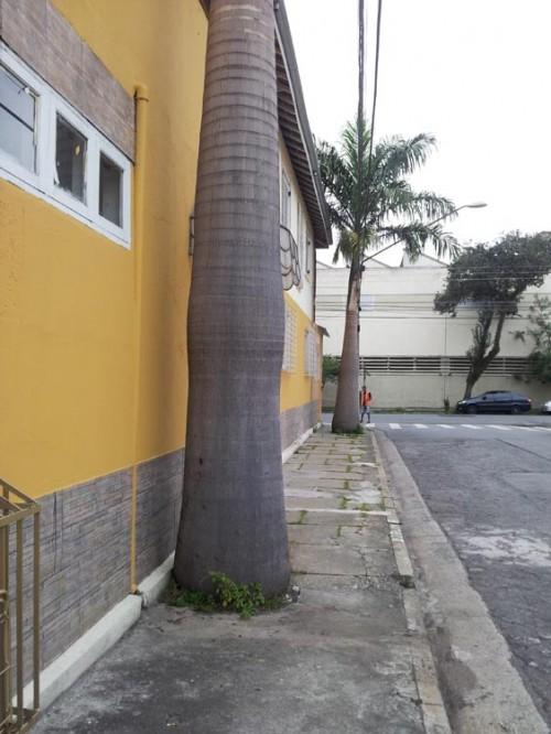 Árvores irregulares