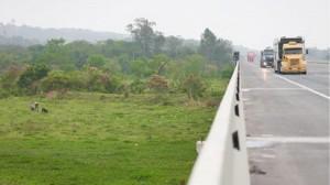 RODOANEL LESTE: Obra atrai 35% dos caminhoneiros