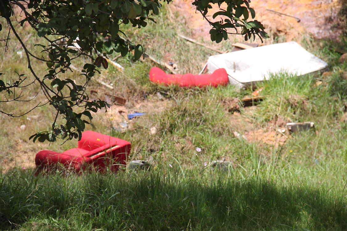 Mato cresce em terrenos na Radial Leste