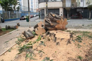TATUAPÉ – Árvore é cortada por 'engano'