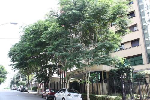 A Rua Itapeti também tem espécies que deixam o logradouro mais atraente
