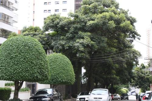 Árvores embelezam trecho na Rua Professor Pedreira de Freitas