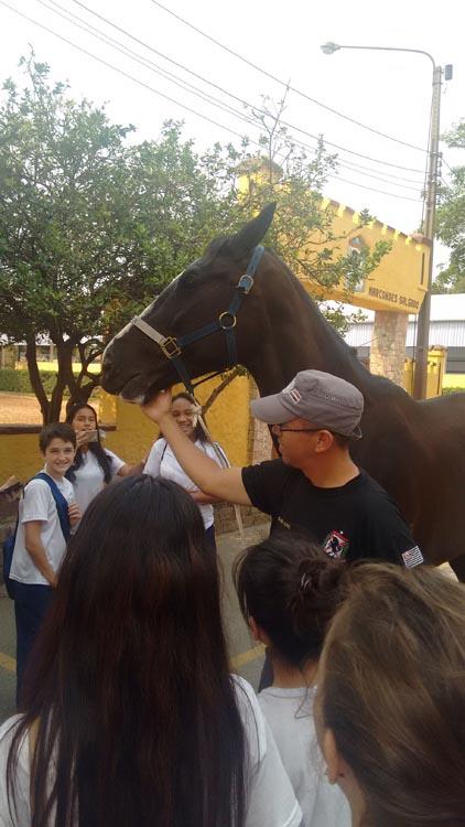 Alunos interagiram com os cavalos e receberam explicações dos PMs