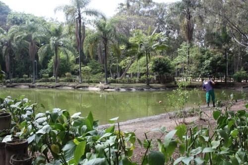 Falta verba para que a secretaria realize a limpeza da água do lago do Piqueri