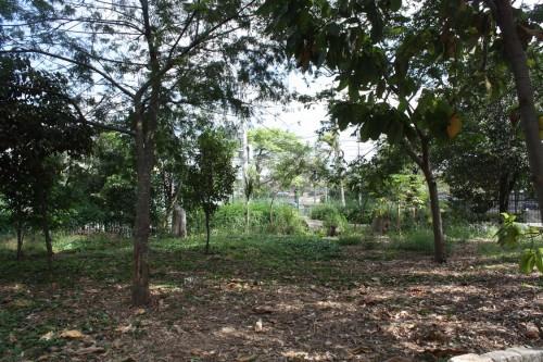 """Área onde ficará o """"Cachorródromo"""" foi denominada e é uma solicitação antiga dos frequentadores do parque"""