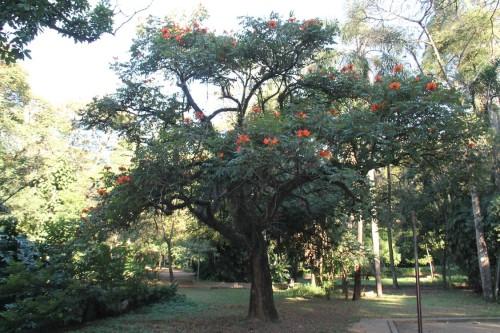 Parque tem 152 espécies de árvores, das quais cinco estão ameaçadas como a grumixama e o pinheiro-do-paraná