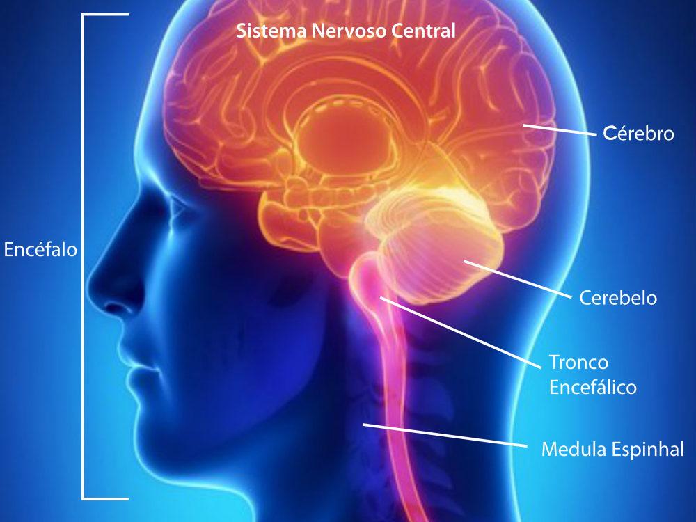ANS abre consulta para inclusão de medicamento para esclerose múltipla